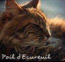 Photo de Poil-Decureuil
