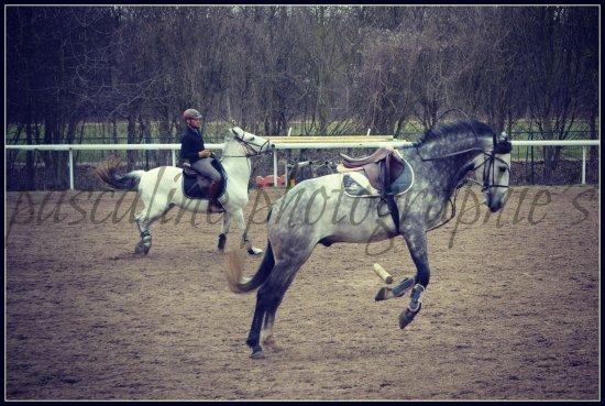 Les chevaux se lachent !