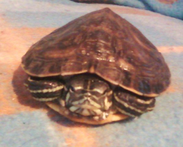 ◆   Voici quelques photos de mes animaux sans montages :-)   ◇