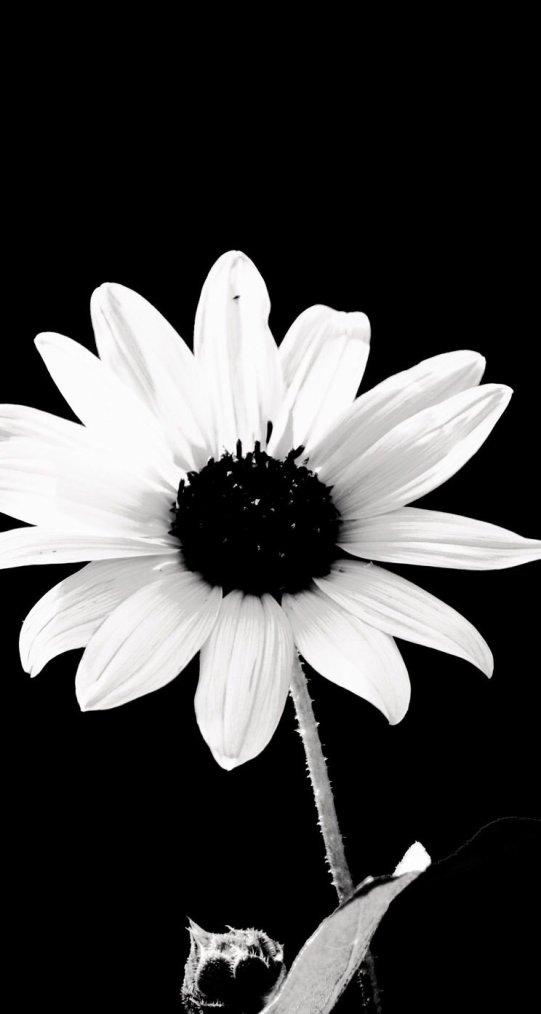 lorsque tu aimes une personne plus qu'elle ne le mérite, tu te blesses plus que tu ne le mérites.