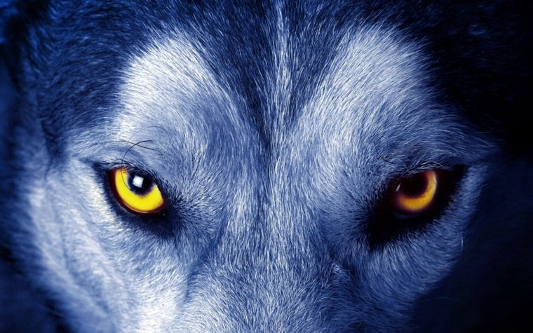 Le loup est toujours celui qui s'en sort et qui enseigne.