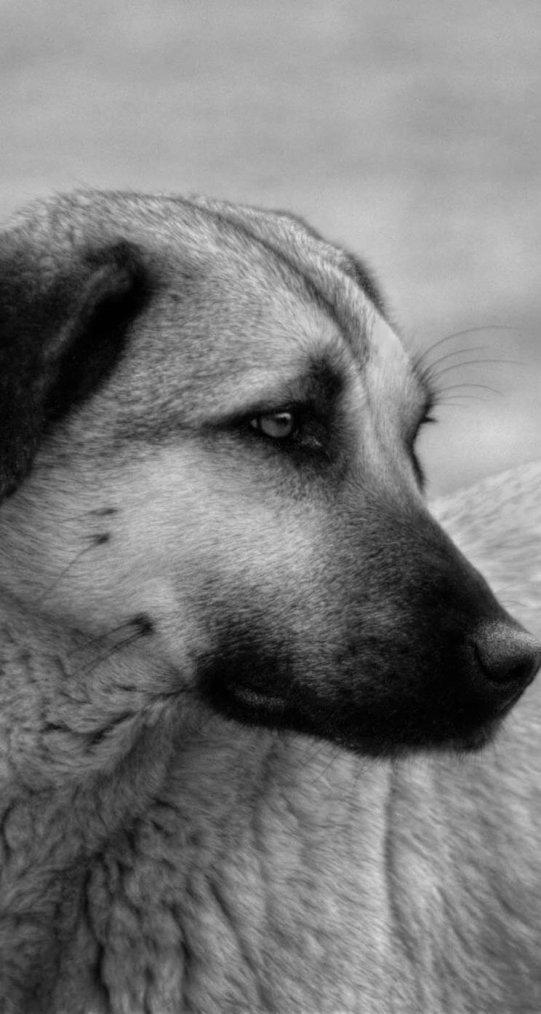 « Le jour où les humains comprendront qu'une pensée sans langage existe chez les animaux, nous mourons de honte de les avoir enfermés dans des zoos et de les avoir humiliés par nos rires… »