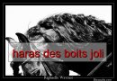 Photo de haras-des-boits-joli