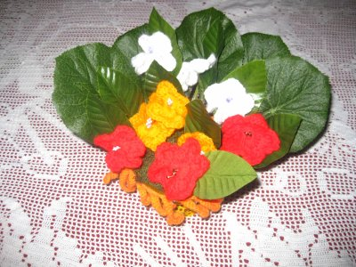 petite plante de couleurs