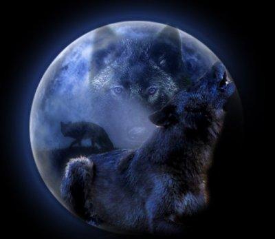 Pendant que le loup n'y est pas...