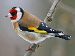mes oiseaux c'est ma vie