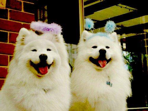 """""""Le chien a son sourire dans sa queue."""" Victor Hugo"""