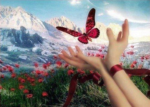 """""""Le bonheur est comme un papillon : il vole sans jamais regarder en arrière."""" Robert Lalonde"""