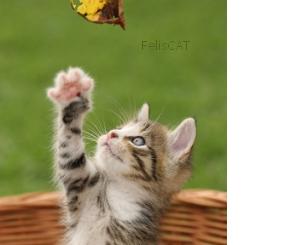 Le chat en mouvement