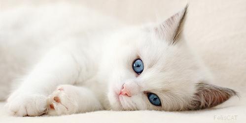 Les questions à se poser avant de choisir un chat