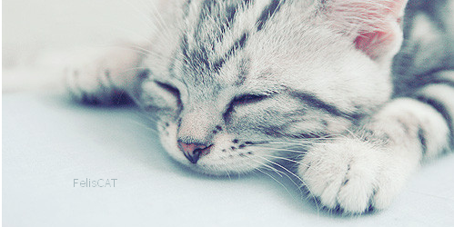 Le chat en bonne santé
