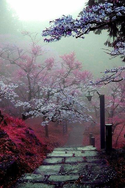 Jardin cerisiers