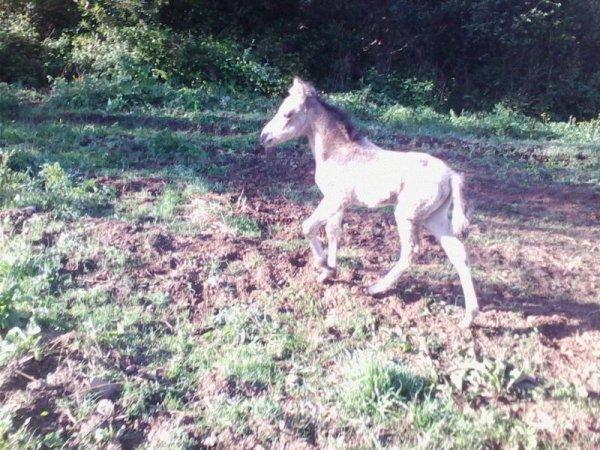 Mon petit cheval femelle