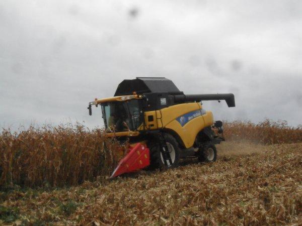 moison de maïs 2011