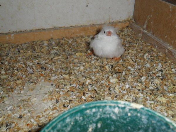 premier jeune sorti du nid