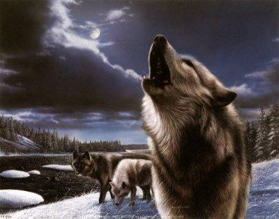 Les loups, qu'est que sa représente pour vous ?
