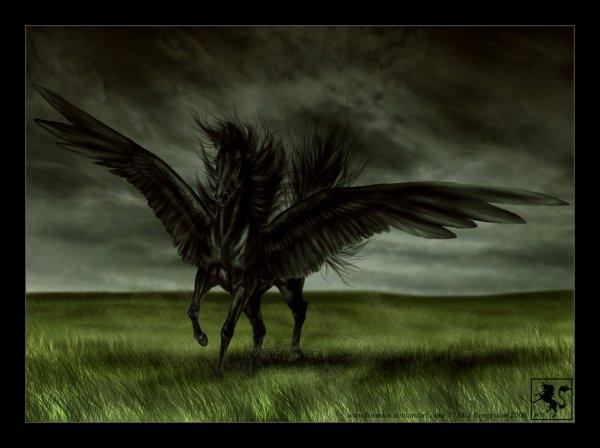 Le pégase noir