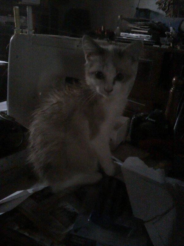 La pire torture de mon chat.