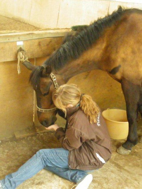 Millenaire poney arrivée dans ma vie en Novembre 2009