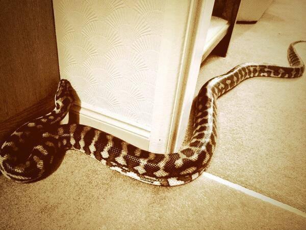 Le serpent de Liam