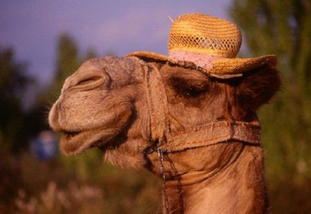 Jeudi rendre visite à mon ami Jaffar la girafe
