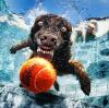 Les chiens sous l'eau <3