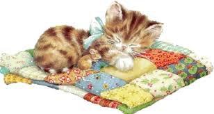 Pochon chat