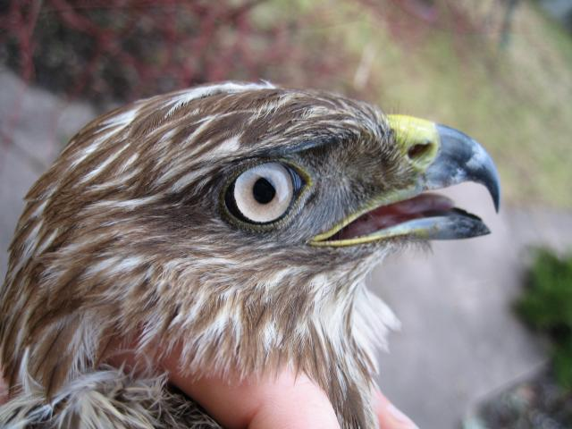 Oiseaux de Petite Camargue Alsacienne
