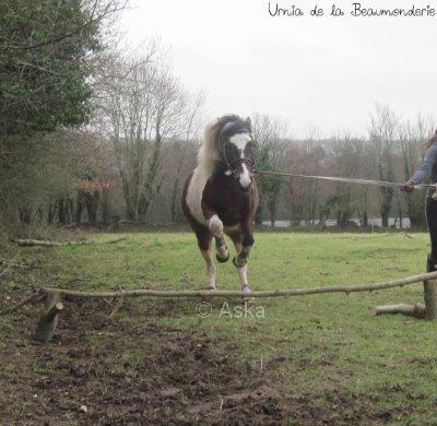 Pepette et moi en saut :)