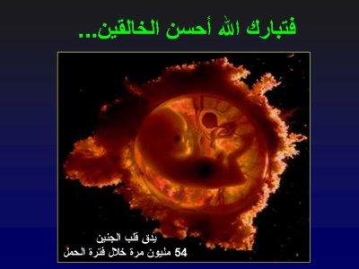 نمو الجنين في بطن أمه 2
