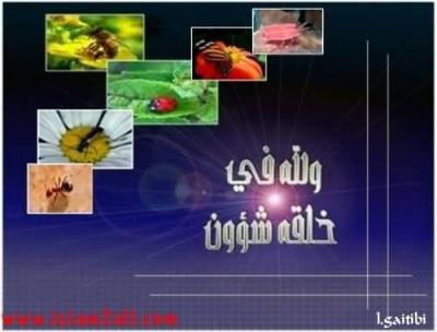 Sans commentaire / بـــدون تـعـلـيق