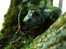 Photo de info-insectes-info