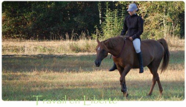 Le respect du cheval est la fondation de la liberté