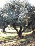 Photo de olive59400