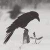 Black Veil Brides IV / Stolen Omen (2014)