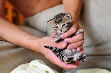 « Un homme cruel avec les animaux ne peut être un homme bon. »
