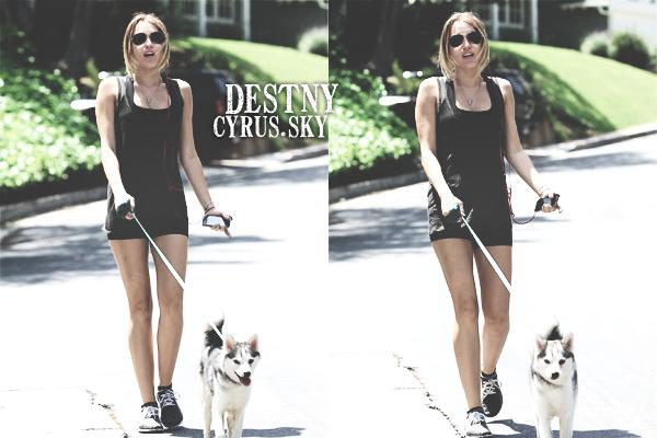 $  30/04/12 | Miley sort de son cours de pilates et promène son chien Floyd dans Studio City. $