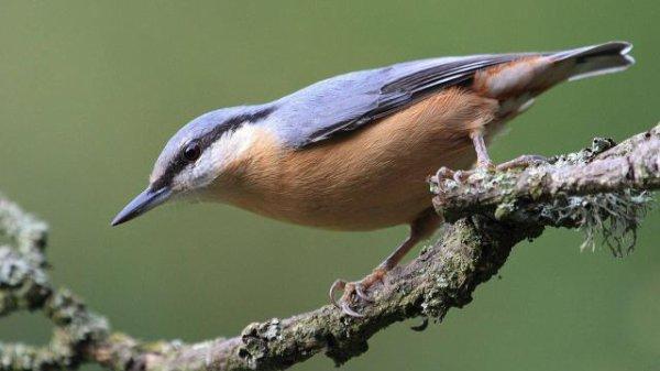 Etre un petit oiseau