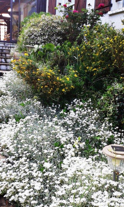 ca y est le printemps est la et bien la !......................rhodos ,azalees,clematites;lavandes et autres rivalisent d eclat et de couleurs