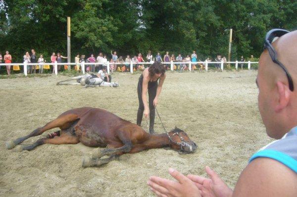 Quand les chevaux font leur cinéma