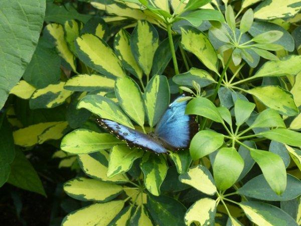 Dans la volière aux papillons du château de Goulaine près de Nantes