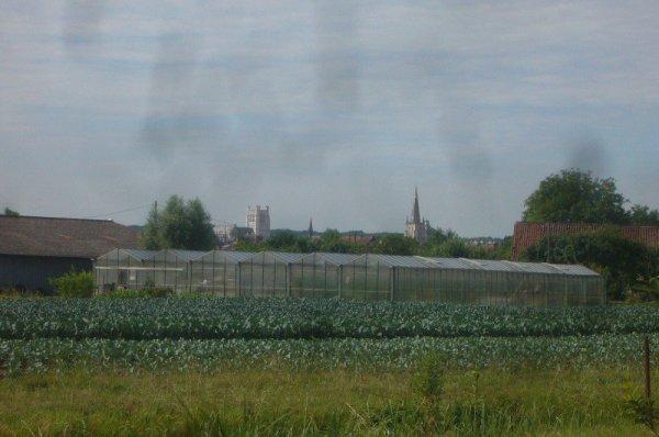 Quand les choux-fleurs du marais de Saint-Omer se vendaient comme des petits pains à Paris !