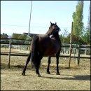 Photo de Fabulous-horse