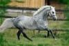 lea-love-chevaux