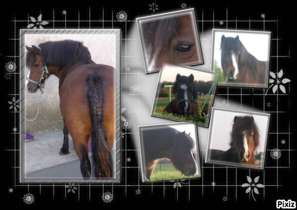 p'tit poney