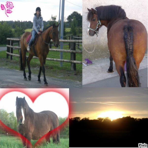cheval/poney