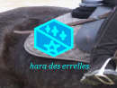 Photo de hara-des-errelles