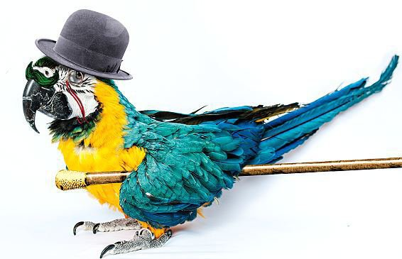 "Poirot and the Parrot : ""I've got a parrot for Mr Poy-rot."""