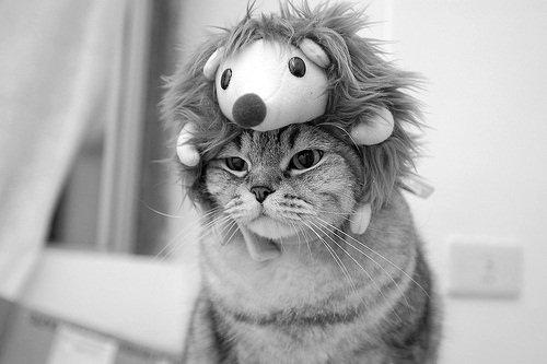 C'est pas le chat Chapeauté