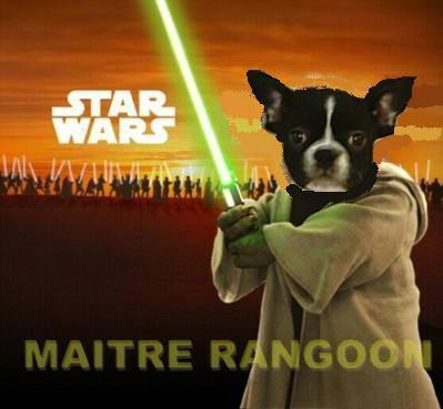 Maître Yoda est un bouledogue français!/El Maestro Jedi Yoda es un bouledogue francés!